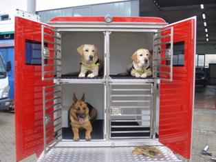Modulo scarrabile per trasporto cani